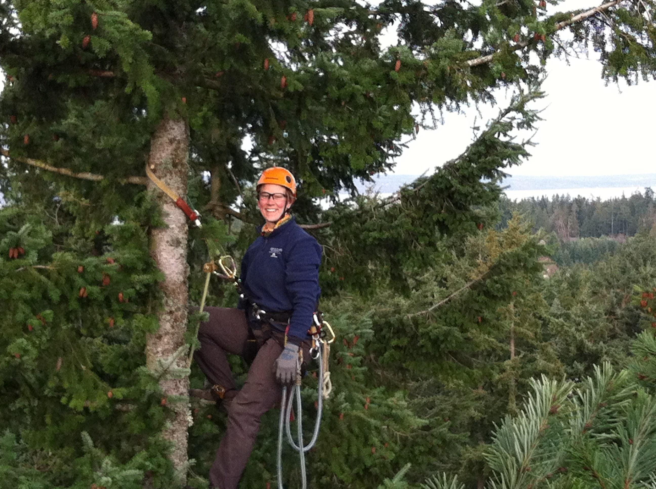 Доктор Айболит для деревьев